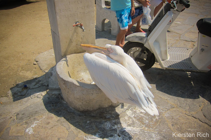 Top-Sehenswürdigkeiten auf Mykonos: Pelikan