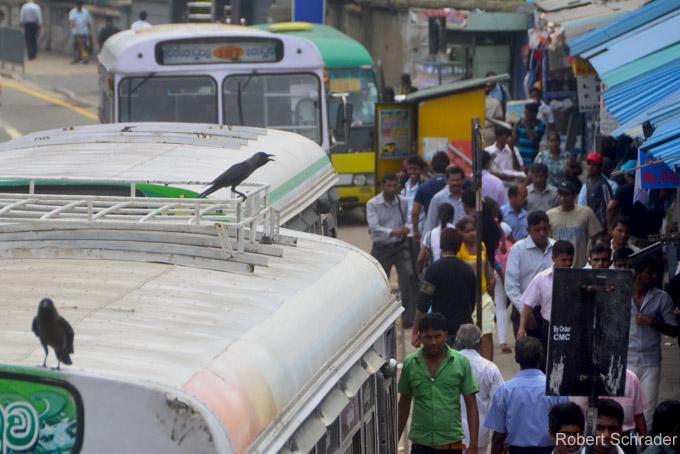 Top-Sehenswürdigkeiten in Colombo: Pettah Markt