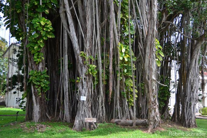 Die schönsten Sehenswürdigkeiten Colombos: Viharamahadevi Park