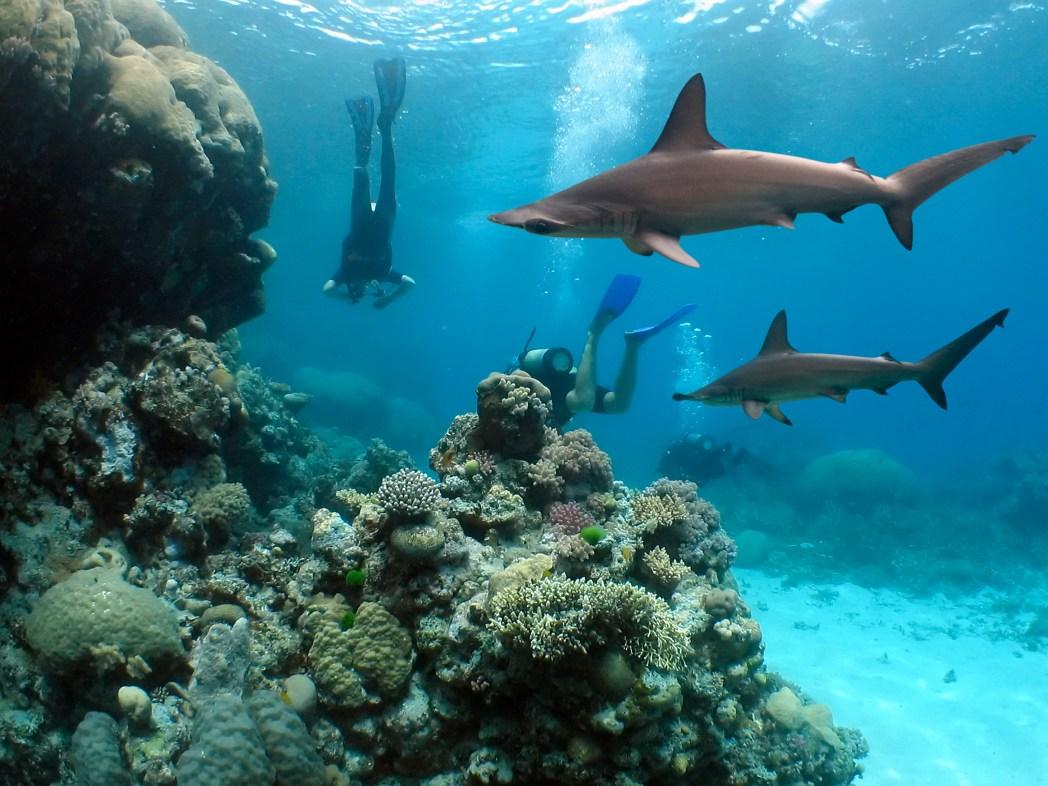 Klischee-Reisen: Mit Haien schwimmen