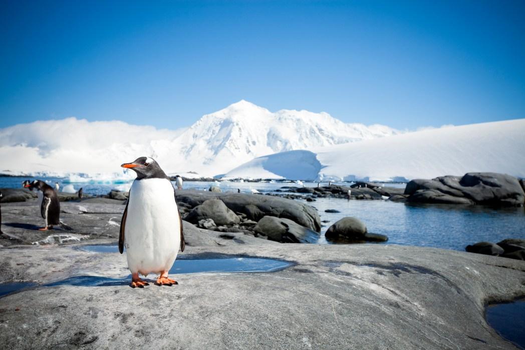 Unentdeckte und wenig bereiste Destinationen: Antarktika
