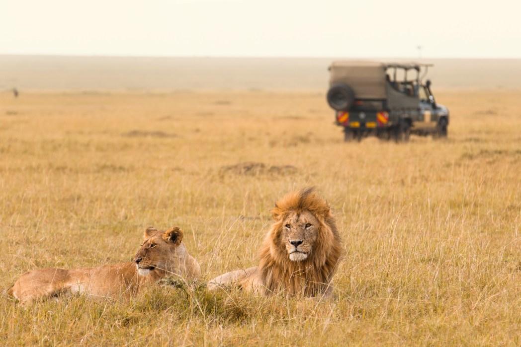 Klischee-Reisen, die man gemacht haben muss: Safari in Kenia