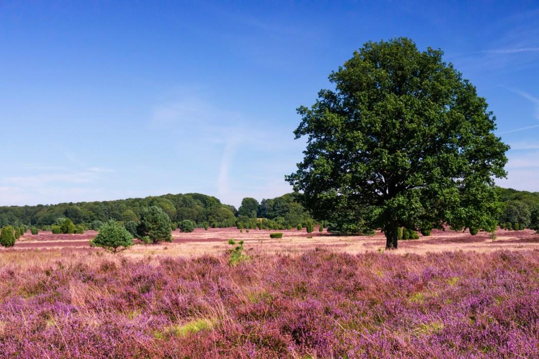 Die schönsten Orte Deutschlands: Lüneburger Heide, Lüneburg, Niedersachsen