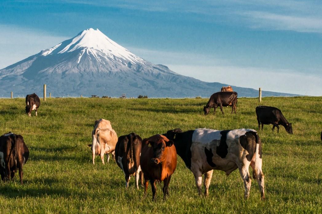 Die besten Road Trips durch Neuseeland: Taranaki