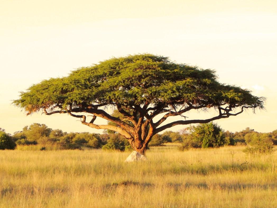 Die Top UNESCO Welterbestätten: Der Serengeti Nationalpark in Tansania