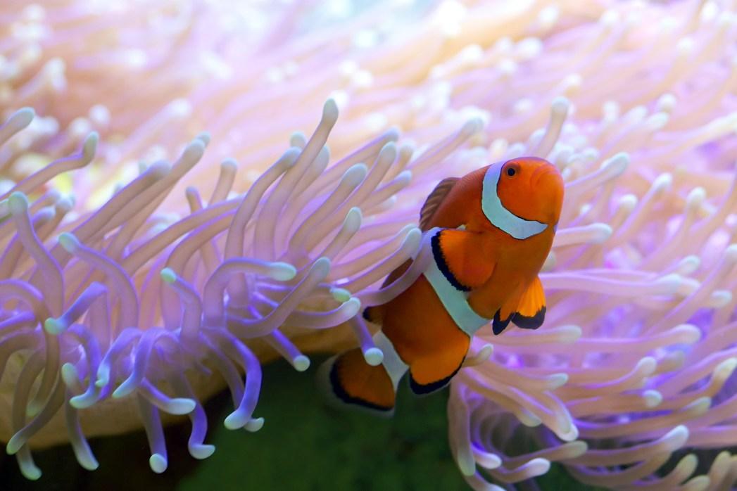 Die Top UNESCO Welterbestätten: Das Great Barrier Reef vor der Küste Australiens