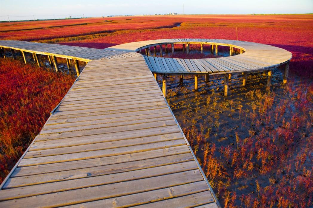 Die schönsten Sehenswürdigkeiten China: Roter Strand von Dawa