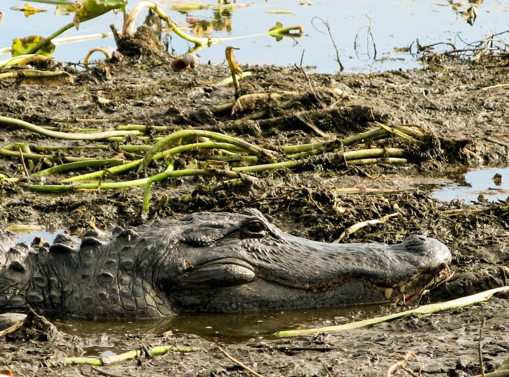 Road Trip durch Florida: Everglades Luftboot Safari