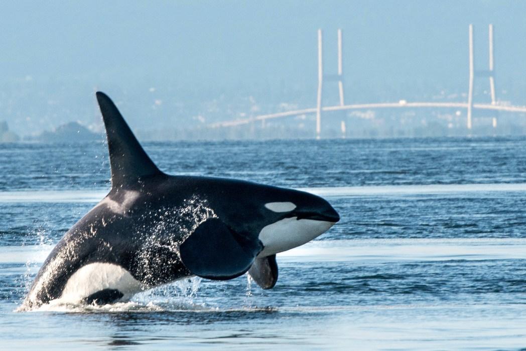 Wildlife Urlaub: Wale