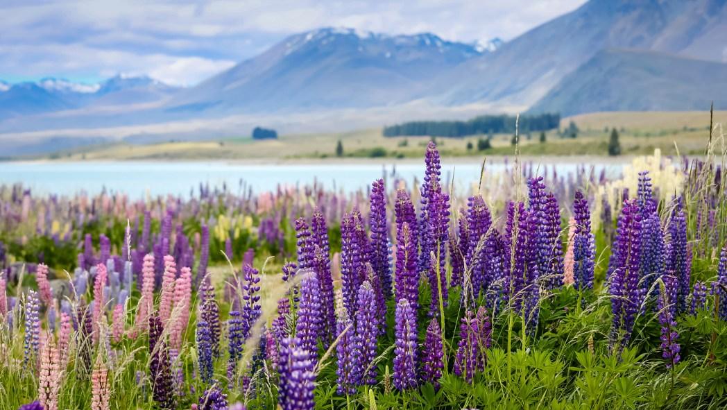 Die besten Road Trips durch Neuseeland: Über Lake Tekapo von Dunedin nach Christchurch
