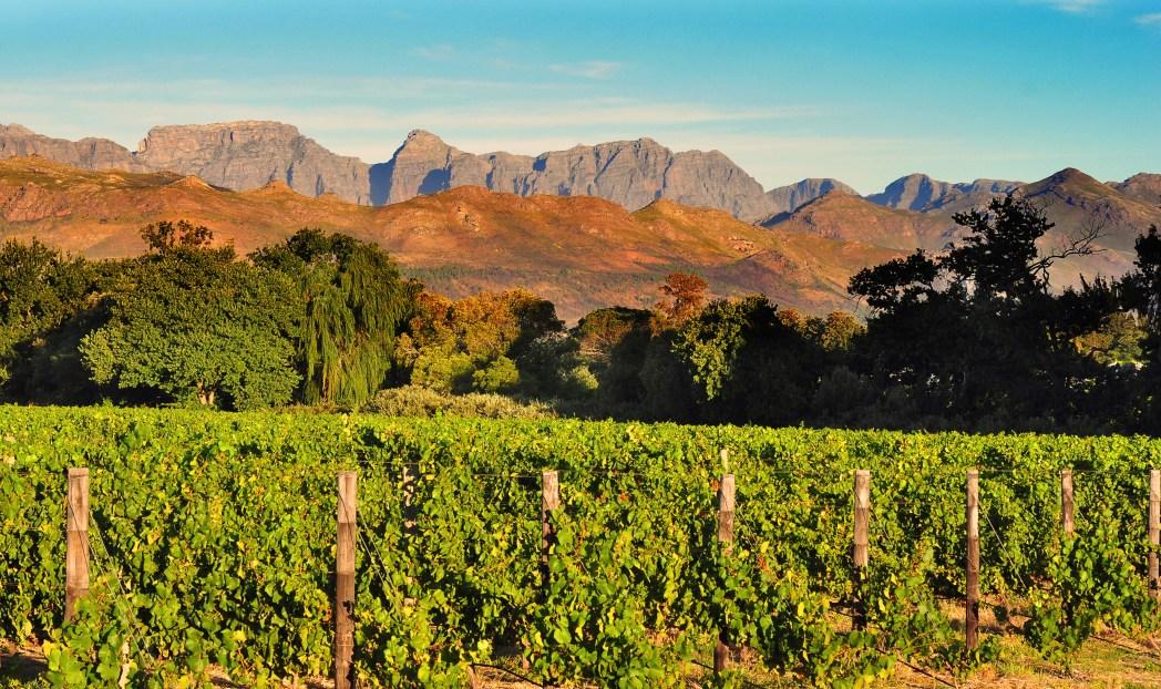 Stellenbosch Weinanbau Kapstadt