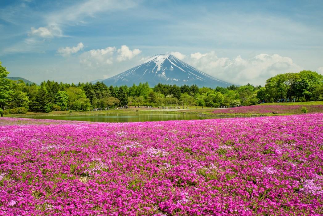 Frühling Japan: Fuji
