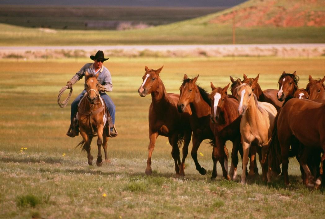 USA-Destinationen: Texas