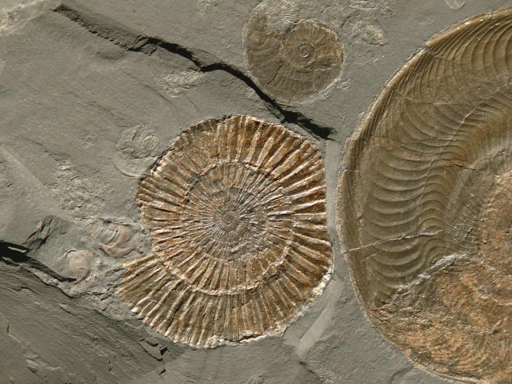 Natur in Deutschland: Fossilienfundstätte, Holzmaden, Baden-Württemberg