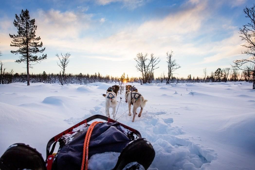 Sehenswürdigkeiten in Norwegen: Hundeschlitten